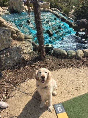 Pet friendly Adventure Experience Adventure golf