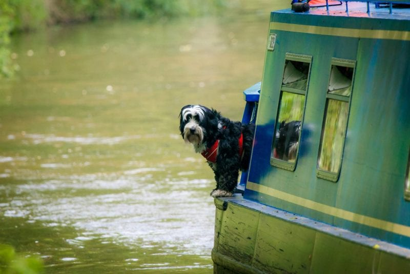 Dog-friendly narrow boat excursions