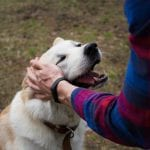 Pet-Friendly Plans for You and Your Pooch