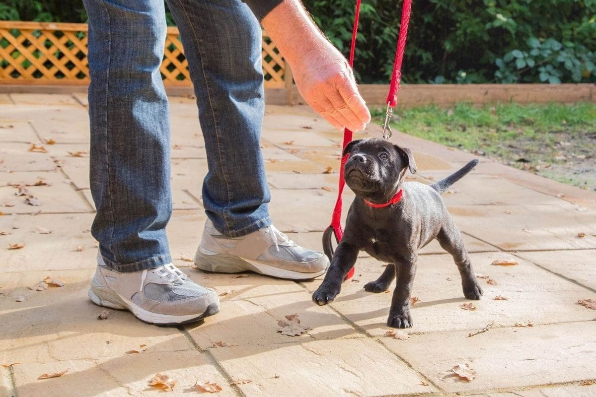 How to Socialise Your Puppy